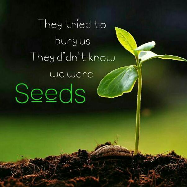 we-were-seeds (1)